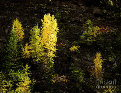 Photograph - Forest Ledges  by The Forests Edge Photography - Diane Sandoval