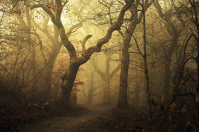 Fog Photograph - Forest by Leif L?ndal