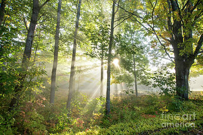 Photograph - Forest Light by Alana Ranney