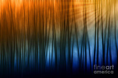 Photograph - Forest Light by Clare VanderVeen