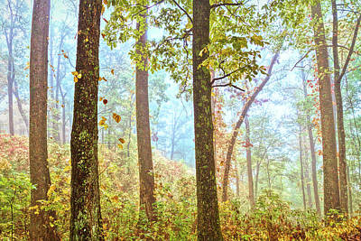 Photograph - Forest Light In Full Detail by Debra and Dave Vanderlaan