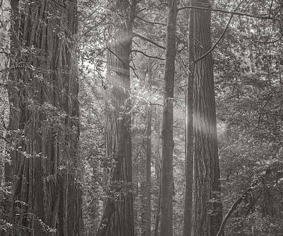 Sun Rays Photograph - Forest Light by Joseph Smith