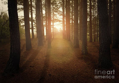 Photograph - Forest Light by Lena Auxier