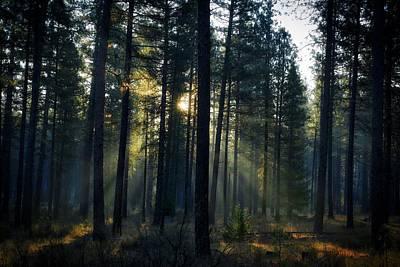 Photograph - Forest Light by Lynn Hopwood