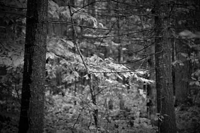 Digital Art - Forest Light by Patrick Groleau