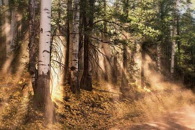 Photograph - Forest Light  by Saija Lehtonen