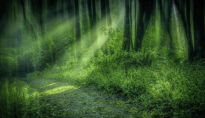 Photograph - Forest Light Streams by Don Schwartz