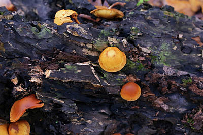 Photograph - Forest Log And Mushrooms by Mary Bedy