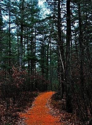 Photograph - Forest  by Matthew Heller