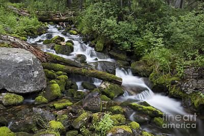 Photograph - Forest Melody by Idaho Scenic Images Linda Lantzy