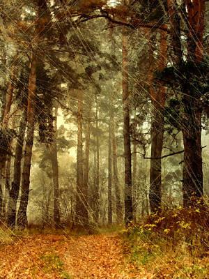 Forest Memories - Vintage Grunge Art Print