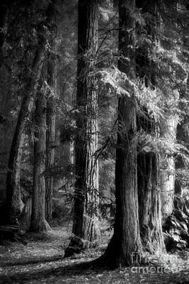 Photograph - Forest Monochrome by Mark Alder