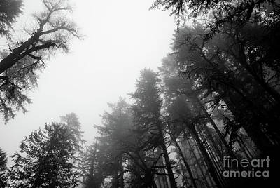 Photograph - Forest Mood by Nick Boren