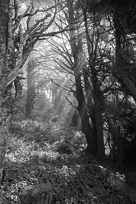 Photograph - Forest Morning by HW Kateley