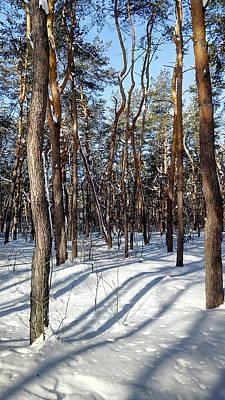 Photograph - Forest Morning by Oleg Zavarzin