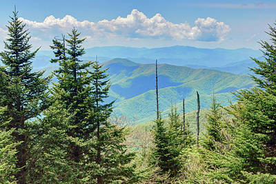 Photograph - Forest - Mountains - Great Smokies by Nikolyn McDonald