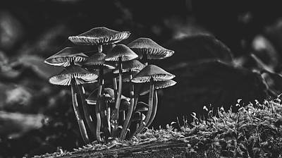 Photograph - Forest Mushrooms by Pixabay