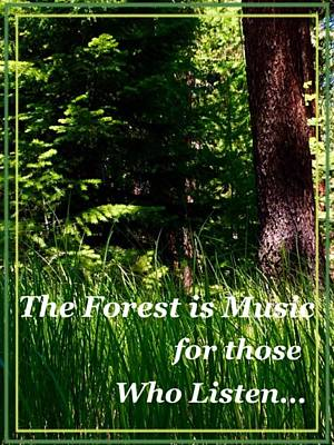 Photograph - Forest Music by Jennifer Lake