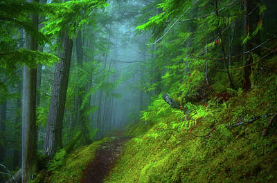 Photograph - Forest Mysteries 2 by Tara Turner
