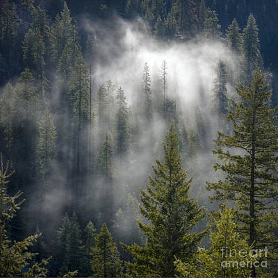 Photograph - Forest Mystery by Idaho Scenic Images Linda Lantzy