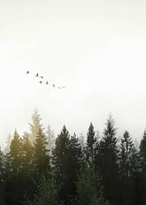Art Print featuring the photograph Forest by Nicklas Gustafsson