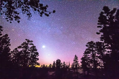 Photograph - Forest Night Star Delight by James BO  Insogna