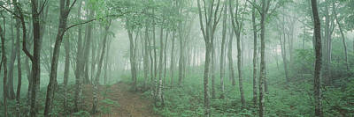 Forest Floor Photograph - Forest Niigata Martsunoyama-cho Japan by Panoramic Images