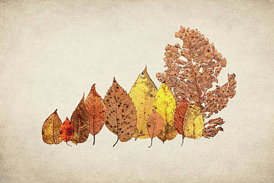 Textures Photograph - Forest Of Autumn Leaves II by Tom Mc Nemar