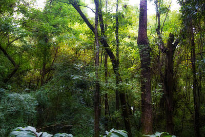 Custom Photograph - Forest Of Color by J Darrell Hutto