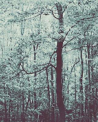 Photograph - Forest Of Dreams by The Art Of Marilyn Ridoutt-Greene
