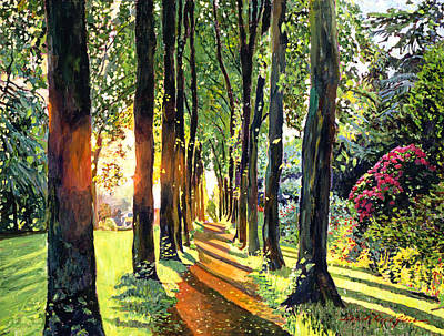 Shadows Painting - Forest Of Enchantment by David Lloyd Glover