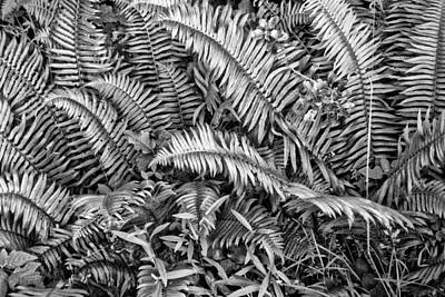 Photograph - Forest Of Fern by Bonnie Bruno