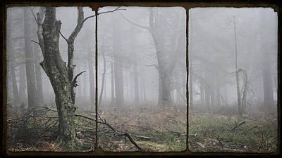 Forest Of Fog Art Print by Daniel Hagerman
