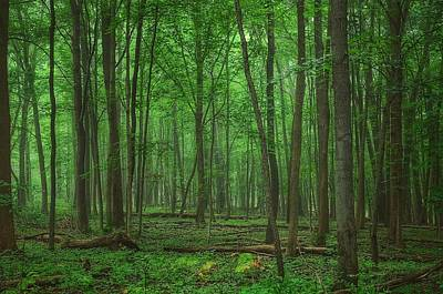 Photograph - Forest Of Green by Nikki McInnes