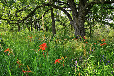 Photograph - Forest Of Happy Valley by Ray Mathis