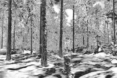 Digital Art - Forest Of Ice And Snow by Mario Carini