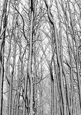 Photograph - Forest Of Infinity by Kathi Mirto