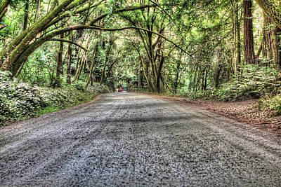 Photograph - Forest Of Nisene Marks by SC Heffner