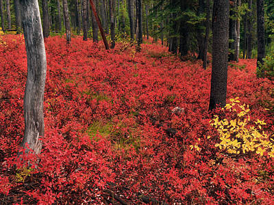Photograph - Forest Of Red by Leland D Howard