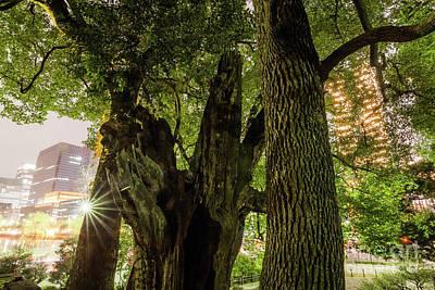 Photograph - Forest Of Tokyo by Tatsuya Atarashi