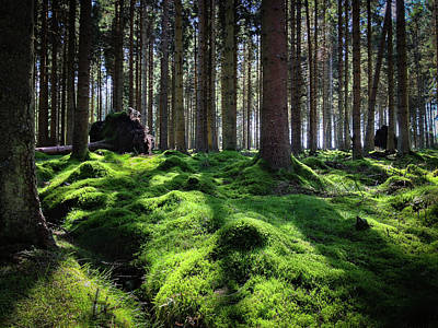 Photograph - Forest Of Verdacy by Geoff Smith