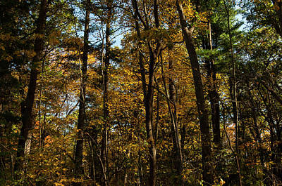 Photograph - Forest Old Brookville  by William Kimble