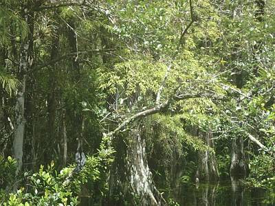 Photograph - Forest On A Swamp by Denise Cicchella