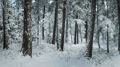Photograph - Forest Pano by Adam Gibbs