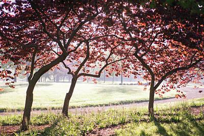Photograph - Forest Park Redbuds by Scott Rackers