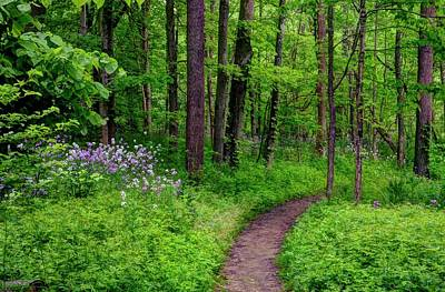 Photograph - Forest Path  by Ann Bridges