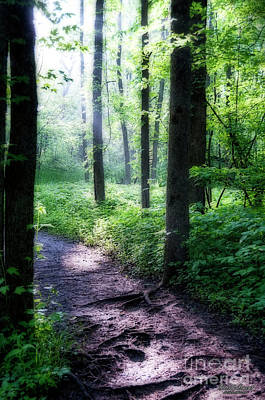 Photograph - Forest Path by David Arment