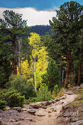 Photograph - Forest Path by Jon Burch Photography