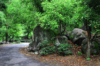 Photograph - Forest Path Through Greenery 1. Sri Lanka by Jenny Rainbow
