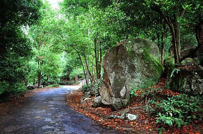 Photograph - Forest Path Through Greenery 2. Sri Lanka by Jenny Rainbow